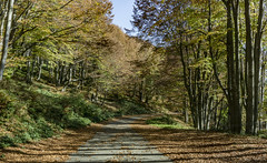 Foliage (Chickenhawk72) Tags: road from shipka pass buzludzha bulgaria foliage autumn fall tree nature leaf leaves explore balcan mountains trees forest light shadow october ottobre evening