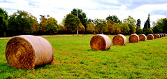 Straw bales in a green meadow (ti_ben) Tags: green meadow pré botte bottes paille vert foin haystacks haystack straw bales ballot ballots hay bale