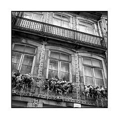 flowers • porto, portugal • 2019 (lem's) Tags: flowers balconies windows house maison fleurs balcons fenetres porto portugal rolleiflex t