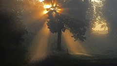 Misty autumn morning (tonyguest) Tags: tree sunlight autumn mist sunbeams sunrays drottningholm stockholm sweden tonyguest iphone shadows green misty light fog morning agge backlight