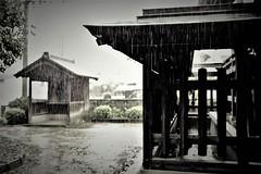 heavy rain (Sat Sue) Tags: olympus micro four thirds m43 penf japan fukuoka shrine