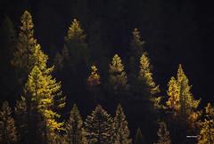 Prove d'autunno (stefano.chiarato) Tags: autunno autumn bosco wood luci lights colori valantrona paesaggio pentax pentaxk70 pentaxlife p