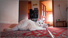 _DSF0660-2.jpg (DrOpMaN®) Tags: lenstagger xe2 m43turkiye korhankumral on1effects captureoneexpress lightroomclassic samyang stilllife samyang12mmf2 fujifilm fuji