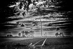 And The Wind Cries (Alfred Grupstra) Tags: blackandwhite nature landscape ruralscene outdoors field sky cloudsky tree nopeople nonurbanscene farm scenics agriculture sunset grass landscaped cloudscape meadow sunlight windmill