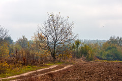 Autumn in the country (Dumby) Tags: landscape giurgiu românia rural autumn fall nature outdoor colors