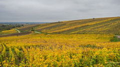 La Route des Vins d'Alsace (Peter Jaspers) Tags: zuiko olympus frompeterj© 2019 omd em10 landscape 169 widescreen fall autumn france french alscace hautrhin grandest routesdesvins colors vineyard vignobles riesling pinotgris gewurztraminer
