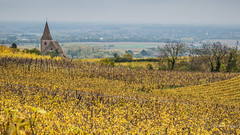 Hunawihr's Fortified Church (Peter Jaspers) Tags: frompeterj© 2019 olympus zuiko omd em10 1240mm28 autumn france frence alsace hautrhin grandest plusbeauxvillagesdefrance hunawihr vue view landscape vignoble vineyard riesling pinotgris gewurztraminer sylvaner wine vin 169 widescreen colors eglise eglisesaintjacqueslemajeur