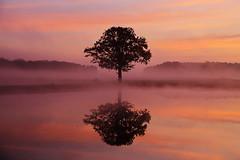 IMG_9836 (geraldtourniaire) Tags: baum spiegelung natur nature nebel canon 24105l eos6d ef sonnenaufgang mittelfranken franken