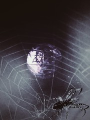 I will get you... (***étoile filante***) Tags: creepy gruselig grusel halloween spider spiderweb spinne spinnennetz window fenster overlay creative kreativ emotions pentaxk30 doubleexposure doppelbelichtung smileonsaturday creepycreatures