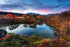 Þingvellir (Jón Óskar.) Tags: þingvellir þingvallavatn þjóðgarður lake lava tree pond iceland jónóskar