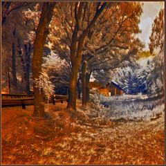 2019 09 30 Nahstätten - 12 fb c Öl verzerrt (Mister-Mastro) Tags: nastätten road tree arbre ir infrared 720nm autumn