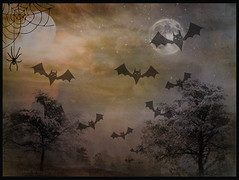 """It was a dark and stormy night ...."" (Elisafox22) Tags: elisafox22 sony rx100 photoshop smileonsaturday hsos creepycreatures hcs clichesaturday night scary bats spider moon moonlight trees spooky spidersweb composition halloween postprocessing textures texturing photomanipulation elisaliddell©2019"