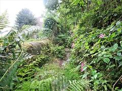 Overgrown Path at Charlestown. (biro2000) Tags: path fern drystone