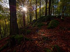 Herbst im Odenwald (Odenwald-Fotograf) Tags: bergstrasse odenwald bensheim laowa ultraweitwinkel ultrawideangle gegenlicht wald forest