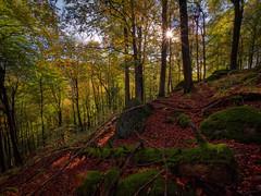 Herbst im Odenwald (Odenwald-Fotograf) Tags: bergstrasse odenwald bensheim laowa ultraweitwinkel ultrawideangle gegenlicht wald forest germany