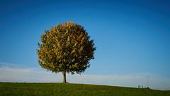 RM-2019-365-299 (markus.rohrbach) Tags: natur pflanze baum projekt365 landschaft
