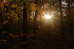Light Shined On My Path (tamasmatusik) Tags: nagyrét autumn autumnleaves fall herbst october október forest wald buda budapest nature sun sunshine lights sony a6000 19mm f22 trees leaves morgen sunrise