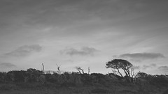 And I pause for a while by a country stile (.KiLTЯo.) Tags: kiltro cl chile tierradelfuego patagonia tree nature landscape clouds sky wind windy bw blackandwhite elitegalleryaoi bestcapturesaoi aoi