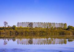LAGO DI RAGOGNA. (FRANCO600D) Tags: ragogna lago lake ragognaslake sandanieledelfriuli fvg friuli friuliveneziagiulia riflessi reflexes calma relax natura nature oasi oasinaturalistica pioppi alberi tree canon eos6dmarkii 6dmarkii canoneos6dmarkii canon6dmarkii franco600d 1255 58 59