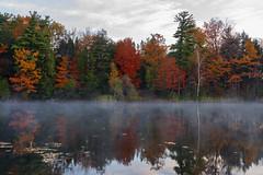 Morning Bliss (Faron Dillon) Tags: ontario richmond hill park lake walk field depth autumn nature fe24105 a7riii sony morning frosty foggy fog mist bond
