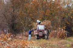 Munca la țară (Dumby) Tags: landscape călărași românia crivăț rural canoneos40d autumn fall