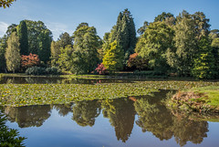 Autumn days (fotosforfun2) Tags: autumn seasons sussex colour color green yellow water reflection mirror foliage arboretum copse lake sun sky blue lily sheffieldpark garden visitor tourism beautiful beauty conifer england uk