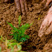 GCF Green Gicumbi Project - Launch