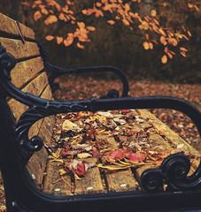 Park Bench (djrocks66) Tags: fall foliage nature autumn park outdoors ny longisland hiking leaves nikon nikonusa z6
