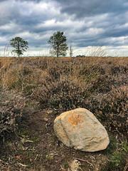 Erik's zwerfkei (Jan R. Ubels) Tags: 201910 gemaaktonderthardlopen drenthe oktober boom balloërveld 2019 flickr steen