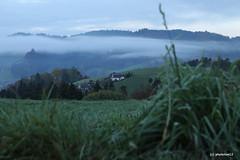 Nebelstreifen am Herbstmorgen (phototom12) Tags: emmental herbst nebel nebelstreifen gras ausblick landschaft