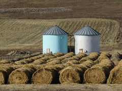 Harvest is done (annkelliott) Tags: alberta canada sofcalgary farmland harvest field haybales texture silos two sidebyside white blue rural ruralscene outdoor fall autumn 24october2019 canon sx60 canonsx60 powershot annkelliott anneelliott ©anneelliott2019 ©allrightsreserved