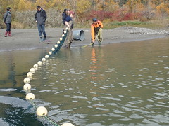 UBC students seining in Fraser River at Skawahlook