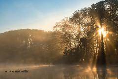 (Laetitia.p_lyon) Tags: fujifilmxt2 lyon lac lake parcdelatêtedor oie goose geese leverdusoleil sunrise
