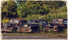 Threesome (* Gemini-6 * (on&off)) Tags: cadillac trees rust patina decay abandoned three automobile transportation vehicle chrome light shadow grunge vintage hss