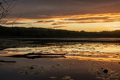 France - Villefontaine - Étang - sunset (Jean-Philippe Le Royer) Tags: sunset canong1x leroyer reflets étang villefontaine coucherdesoleil sony urban atmosphere canaux tree a7iii sonyalpha7 urbain arbre sonya7 eau