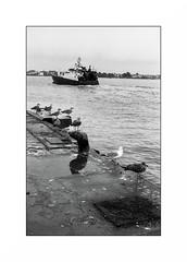 Lorient, zone portuaire (Punkrocker*) Tags: nikon fm2n nikkor ais 28mm 2828 film kodak tmax 400 nb bnw monochrome bwfp port harbor boat keroman lorient anoriant morbihan bretagne brittany breizh france