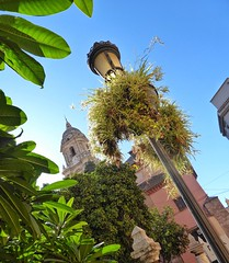 Beauty in a lamp post (Andreadm66) Tags: plants spain cathedral lamppost costadelsol malaga leaves
