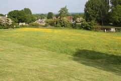 IMG_5179 (RichardAsh1981) Tags: flowers buttercup canals hatton grandunioncanal hattonlocks
