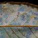 Texture. Macro 1:1