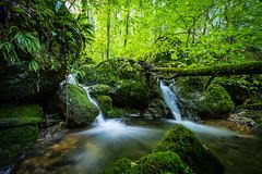 Wilder Ibach (UpuautX) Tags: sony a7iii 1635mm zeiss schweiz switzerland kaltbrunnental laufental grellingen ibach bach creek moos moss langzeitbelichtung