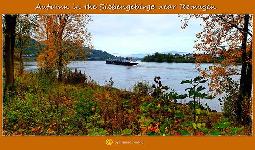 Herbst im Siebengebirge Nähe Rehmagen/Autumn in the Siebengebirge near Remagen