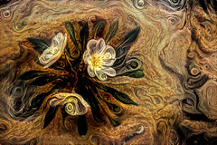 Flowing in the Desert (laxwings) Tags: photoshopartistry photoartistry photomanipulation flowers floral flora