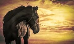 Golden Hour (lleon1126) Tags: horse farmanimal dusk profile portrait equestrian friendlychallenges diamondchallenge staraward