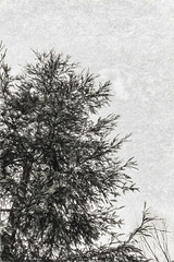 Thirty Feet (p) (davidseibold) Tags: america aptosblue backyard bakersfield california jfflickr kerncounty painting photosbydavid plant platoct postedonflickr sky tree unitedstates usa