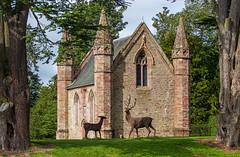 IMG_0070_adj (md93) Tags: scone palace perth scotland