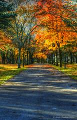 tree lined driveway (Arvo Poolar) Tags: outdoors ontario canada markham arvopoolar nature nikond500 fallcolors autumn trees naturallight natural naturephotography