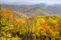 Blue Ridge Parkway Autumn Landscape (esywlkr) Tags: landscape autumn fall fallcolors nc nature forest trees pisgahnationalforest brp blueridgeparkway