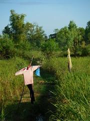 Scarecrows หุ่นไล่กา 1 (SierraSunrise) Tags: thailand phonphisai nongkhai isaan esarn farming agriculture scarecrow paddy ricepaddy ricepaddies grain