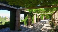 Covered Trellis Walkway, Generalife, La Alhambra, Granada, Andalusia, Spain (dannymfoster) Tags: spain andalusia andalucia granada alhambra laalhambra generalife palace palacio palaciodelgeneralife garden walkway trellis