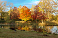 Relax and Enjoy the View (amillionwalks) Tags: bench rest trees colour pond oakhill autumn 2019 october fall foliage sunset bullrush